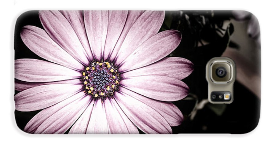 Flower Galaxy S6 Case featuring the photograph Purple Flower by Al Mueller