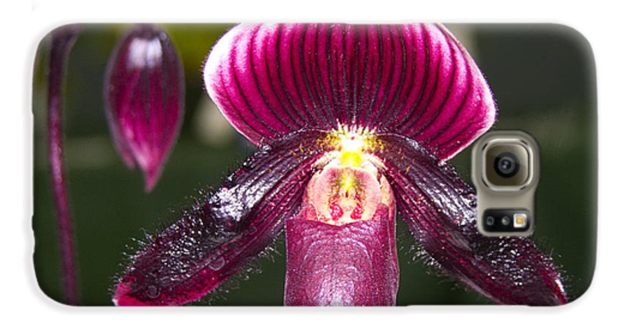 Flowers Galaxy S6 Case featuring the photograph Purple Orchid by Ann Tracy