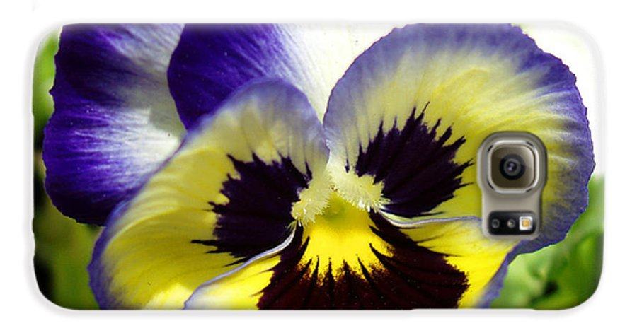 Pansy Galaxy S6 Case featuring the photograph Purple White And Yellow Pansy by Nancy Mueller