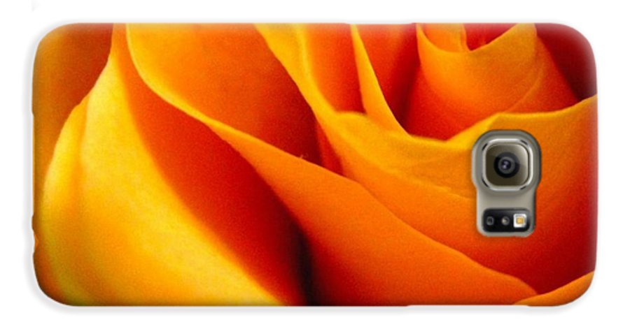 Rose Galaxy S6 Case featuring the photograph Queen Rose by Rhonda Barrett