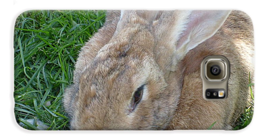Rabbit Galaxy S6 Case featuring the photograph Rabbit Head On by Melissa Parks