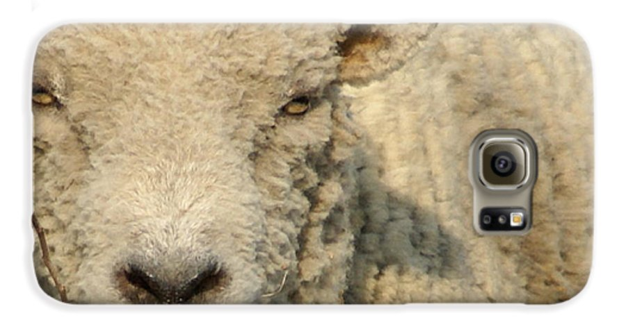 Farm Animal Galaxy S6 Case featuring the photograph Ramsy - Debbie-may by Debbie May
