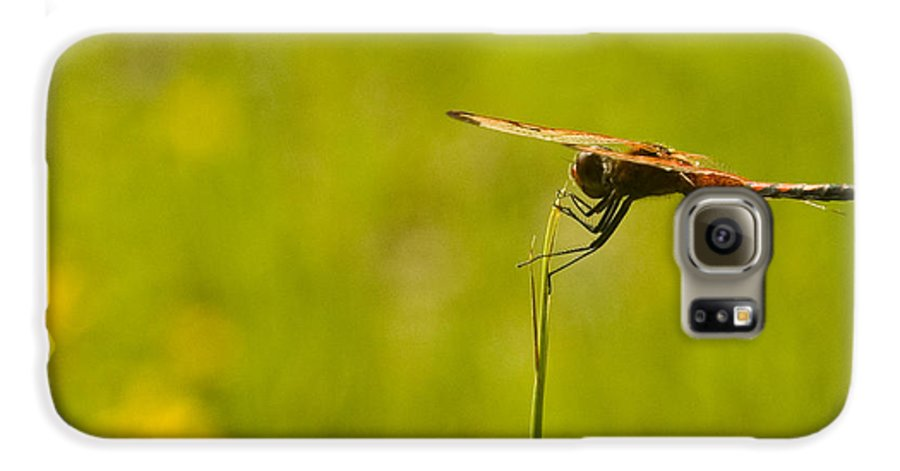 Dragonfly Galaxy S6 Case featuring the photograph Ready For Flight by Douglas Barnett
