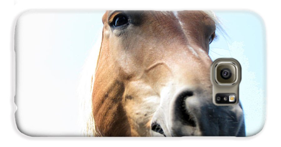 Horse Galaxy S6 Case featuring the photograph Really by Amanda Barcon