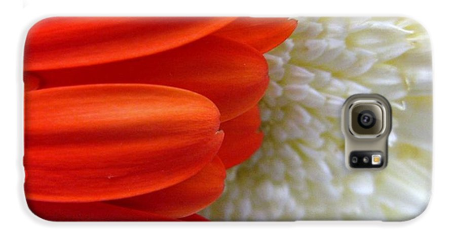 Flowers Galaxy S6 Case featuring the photograph Red And White by Rhonda Barrett