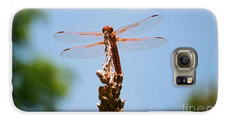 Dragonfly Galaxy S6 Case featuring the photograph Red Dragonfly by Dean Triolo