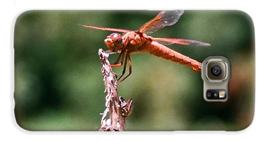 Dragonfly Galaxy S6 Case featuring the photograph Red Dragonfly II by Dean Triolo