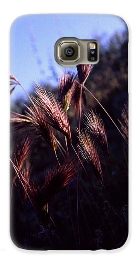 Nature Galaxy S6 Case featuring the photograph Red Feathers by Randy Oberg