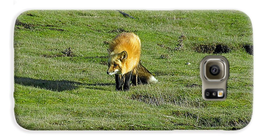 Fox Galaxy S6 Case featuring the photograph Red Fox by Louise Magno