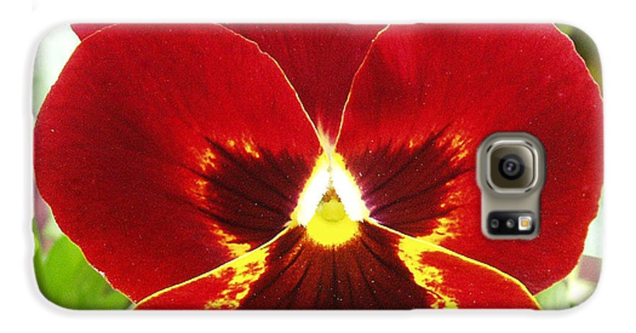 Red Galaxy S6 Case featuring the photograph Red Pansy by Nancy Mueller