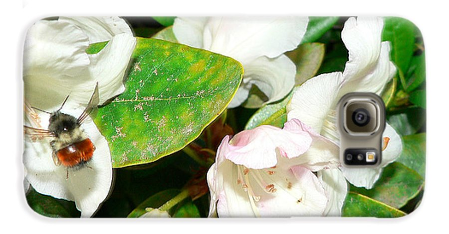 Bee Galaxy S6 Case featuring the photograph Rhododendron And Bee by Larry Keahey