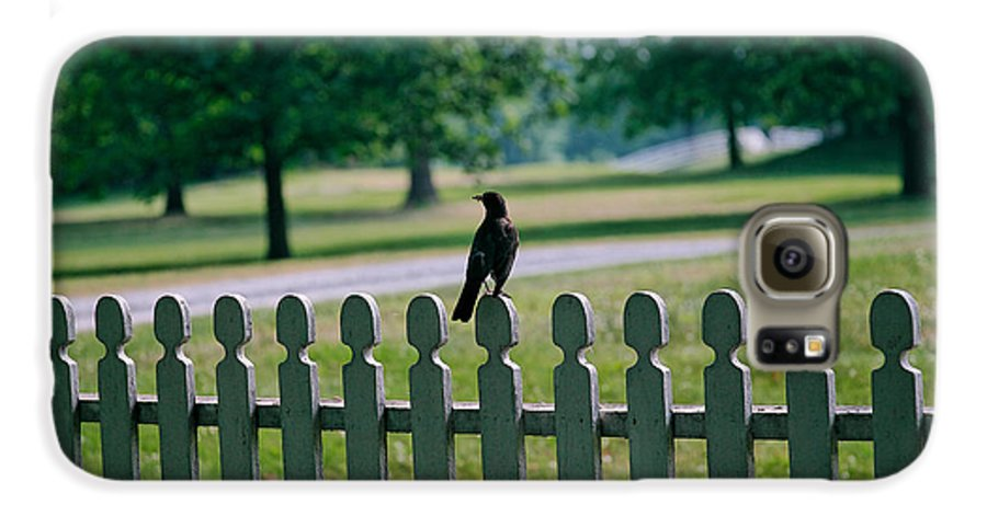 Bird Galaxy S6 Case featuring the photograph Robin On A Fence by Lone Dakota Photography
