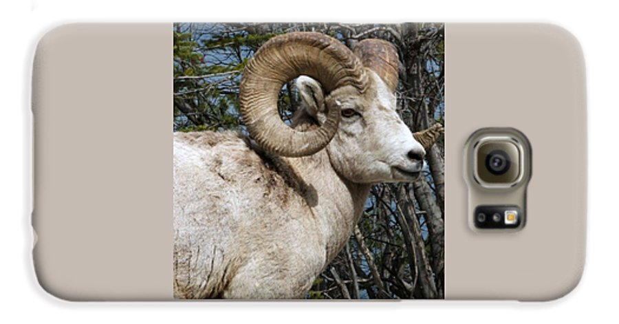 Wildlife Galaxy S6 Case featuring the photograph Rocky Mountain Ram by Tiffany Vest