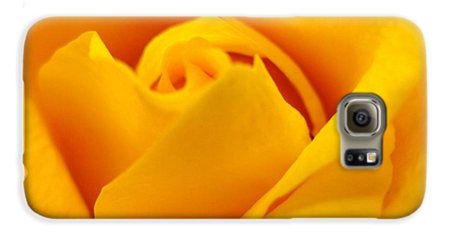 Rose Galaxy S6 Case featuring the photograph Rose Yellow by Rhonda Barrett