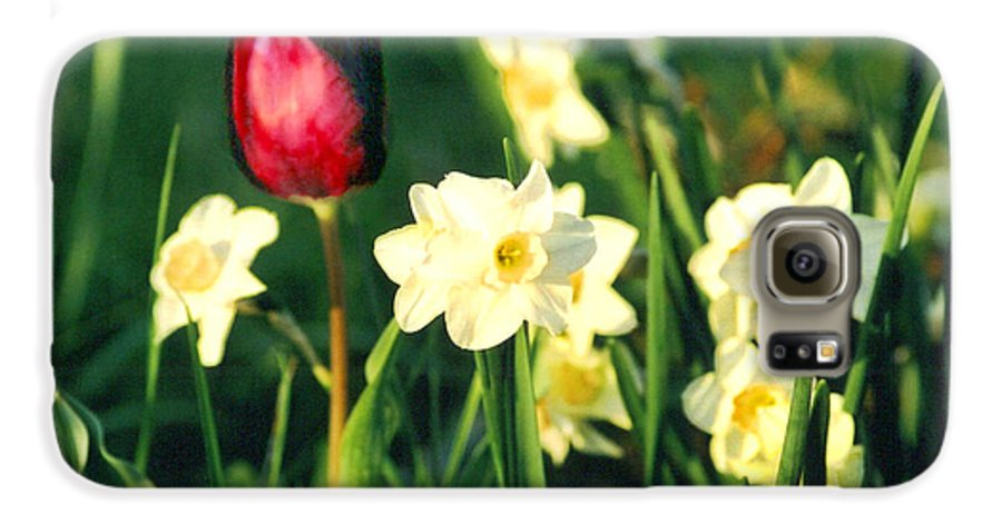 Tulips Galaxy S6 Case featuring the photograph Royal Spring by Steve Karol
