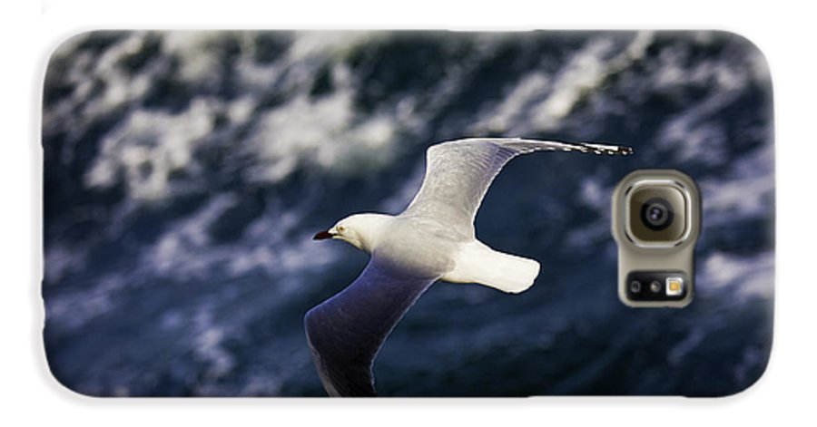 Seagull Galaxy S6 Case featuring the photograph Seagull In Wake by Avalon Fine Art Photography