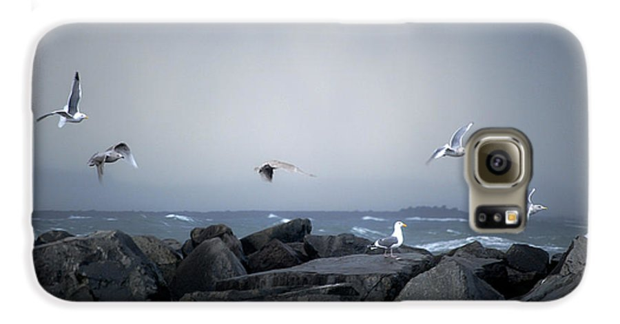 Landscape Galaxy S6 Case featuring the photograph Seagulls In Flight by Larry Keahey