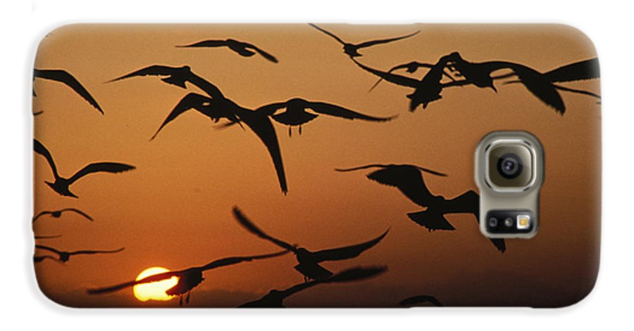 Birds Galaxy S6 Case featuring the photograph Seagulls In Sunset by Carl Purcell