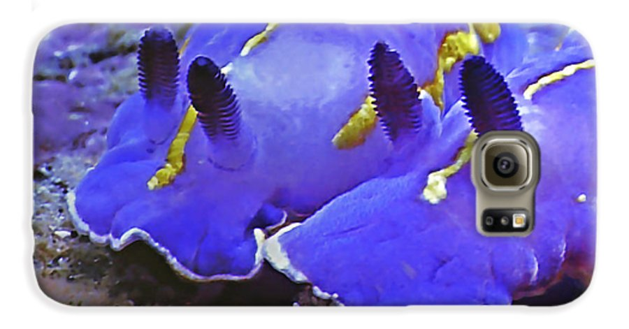 Ocean Galaxy S6 Case featuring the photograph Sealife Underwater Snails by Christine Till