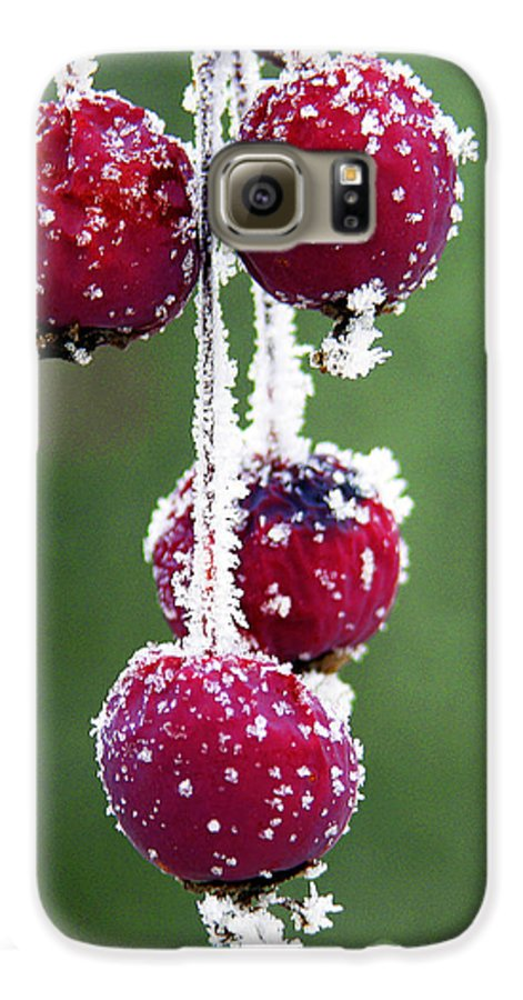 Berries Galaxy S6 Case featuring the photograph Seasonal Colors by Marilyn Hunt