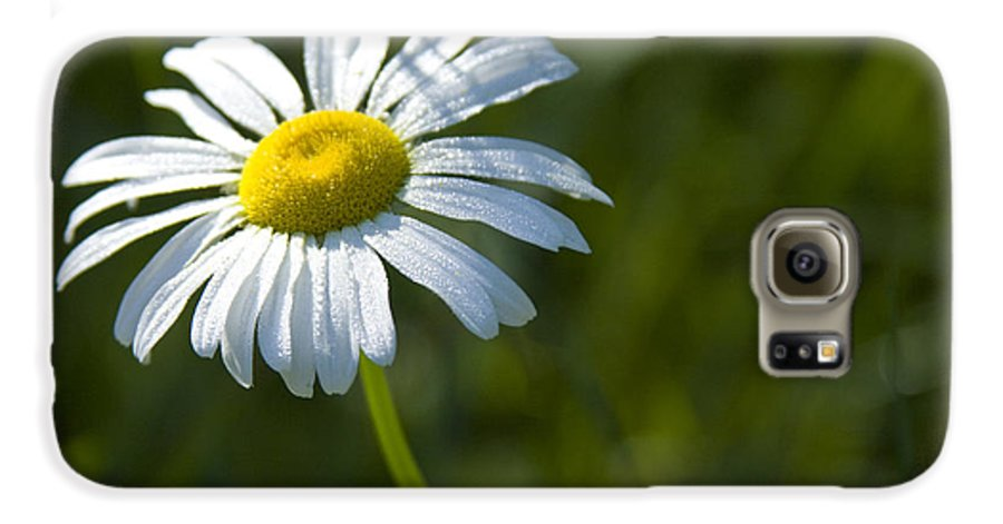 Daisy Galaxy S6 Case featuring the photograph Searching For Sunlight by Idaho Scenic Images Linda Lantzy
