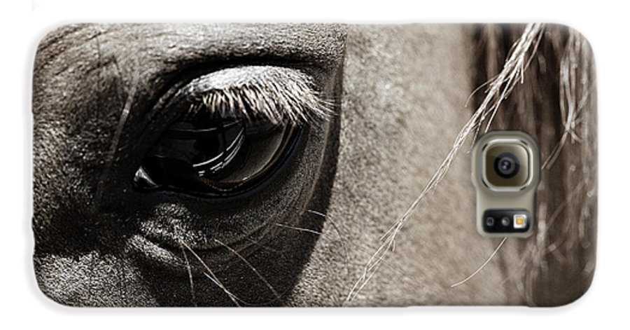 Americana Galaxy S6 Case featuring the photograph Stillness In The Eye Of A Horse by Marilyn Hunt