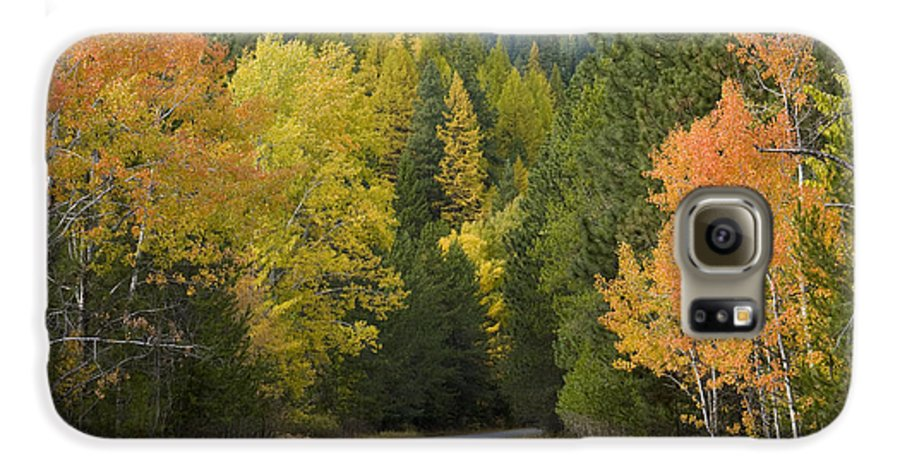 Trees Galaxy S6 Case featuring the photograph Selkirk Color by Idaho Scenic Images Linda Lantzy