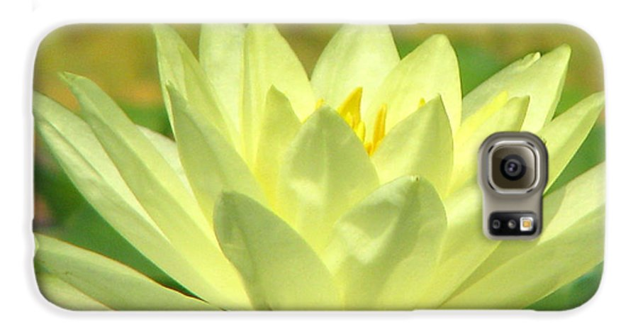 Lillypad Galaxy S6 Case featuring the photograph Shades by Amanda Barcon