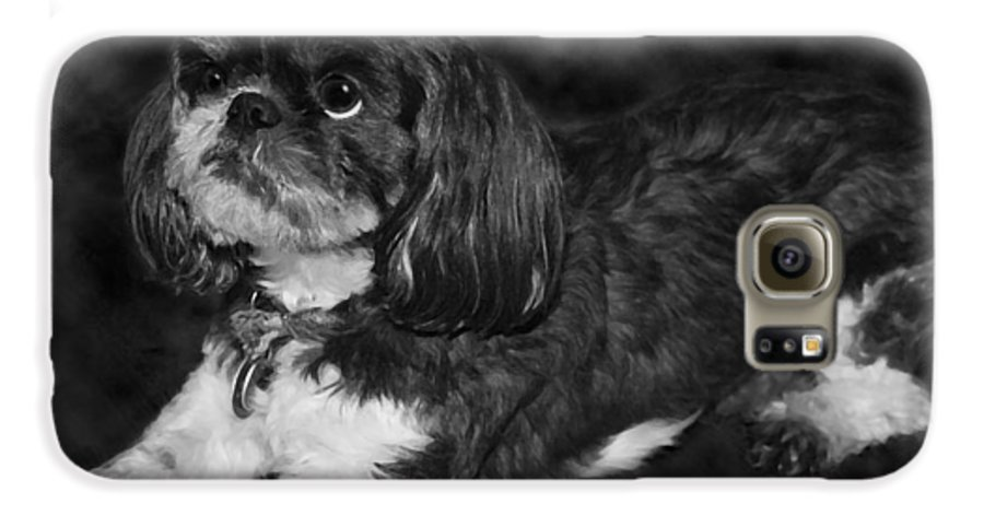3scape Photos Galaxy S6 Case featuring the painting Shih Tzu by Adam Romanowicz