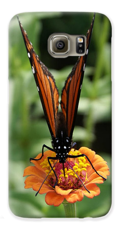 Butterflies Galaxy S6 Case featuring the painting Sip Sip Away by Debbie May