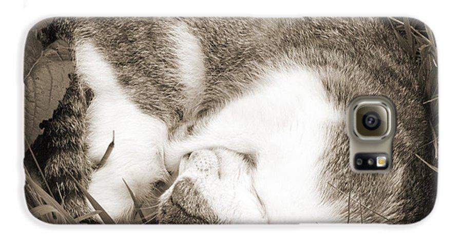 Pets Galaxy S6 Case featuring the photograph Sleeping by Daniel Csoka