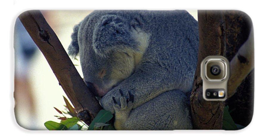 Sleep Galaxy S6 Case featuring the photograph Sleepy Koala Bear by Carl Purcell