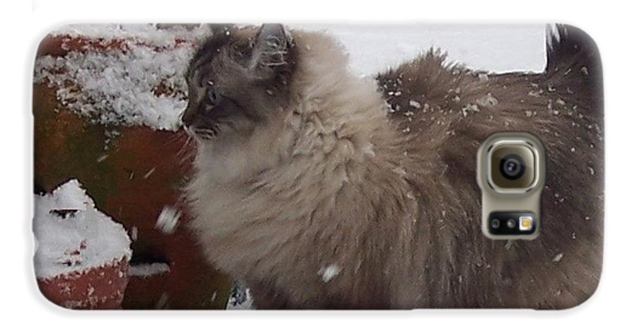Cats Galaxy S6 Case featuring the photograph Snow Kitty by Debbi Granruth