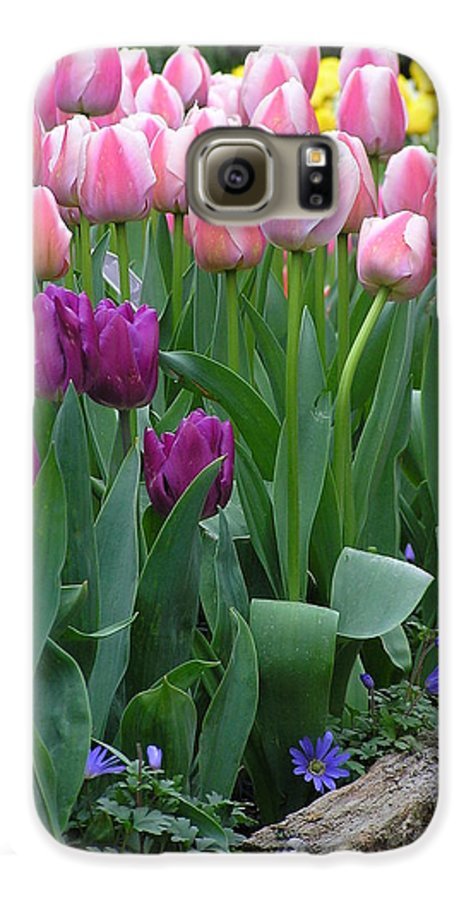 Tulips Galaxy S6 Case featuring the photograph Spring Colors by Louise Magno