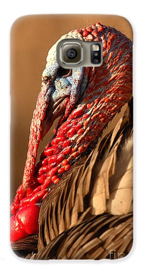 Turkey Galaxy S6 Case featuring the photograph Spring Portrait Of Wild Turkey Tom by Max Allen
