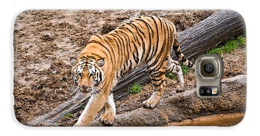 Tiger Galaxy S6 Case featuring the photograph Stalking Tiger - Bengal by Douglas Barnett