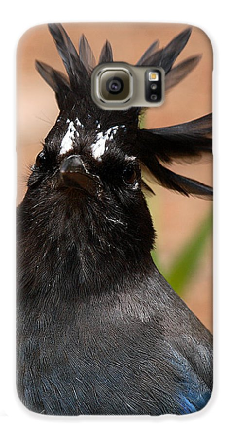 Jay Galaxy S6 Case featuring the photograph Stellar's Jay With Rock Star Hair by Max Allen