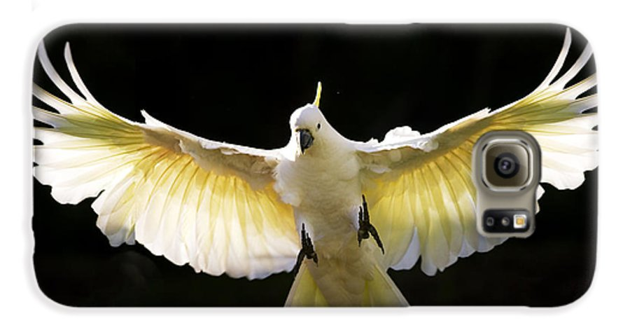 Sulphur Crested Cockatoo Australian Wildlife Galaxy S6 Case featuring the photograph Sulphur Crested Cockatoo In Flight by Avalon Fine Art Photography
