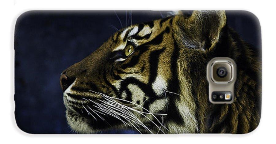 Sumatran Tiger Galaxy S6 Case featuring the photograph Sumatran Tiger Profile by Avalon Fine Art Photography