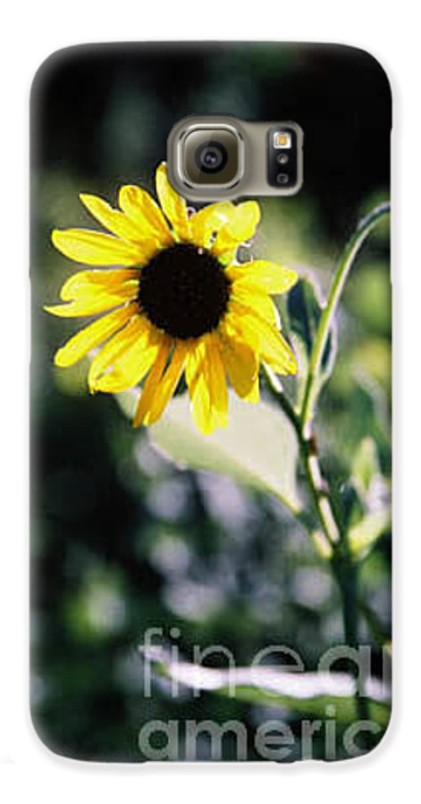 Sunflower Galaxy S6 Case featuring the photograph Summer Sunshine by Kathy McClure