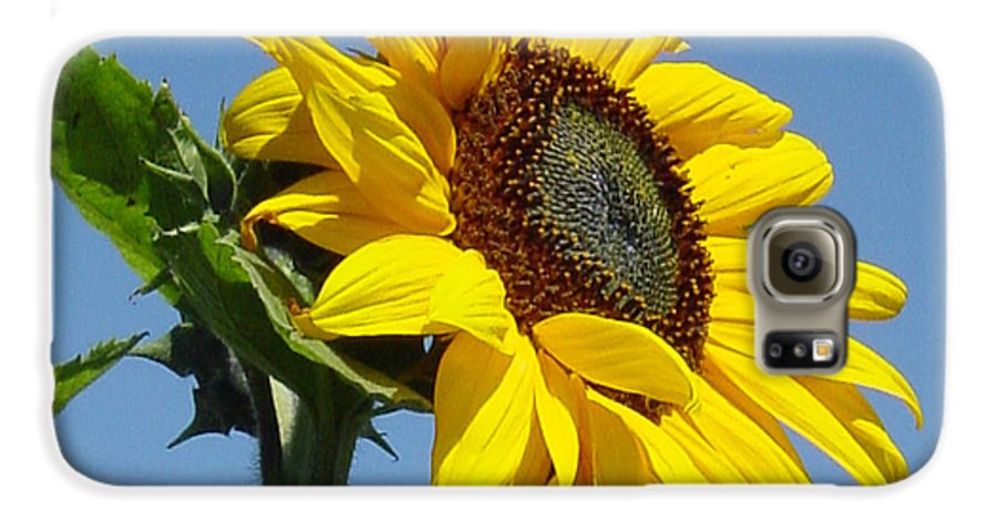 Sunflower Galaxy S6 Case featuring the photograph Sun Goddess by Suzanne Gaff