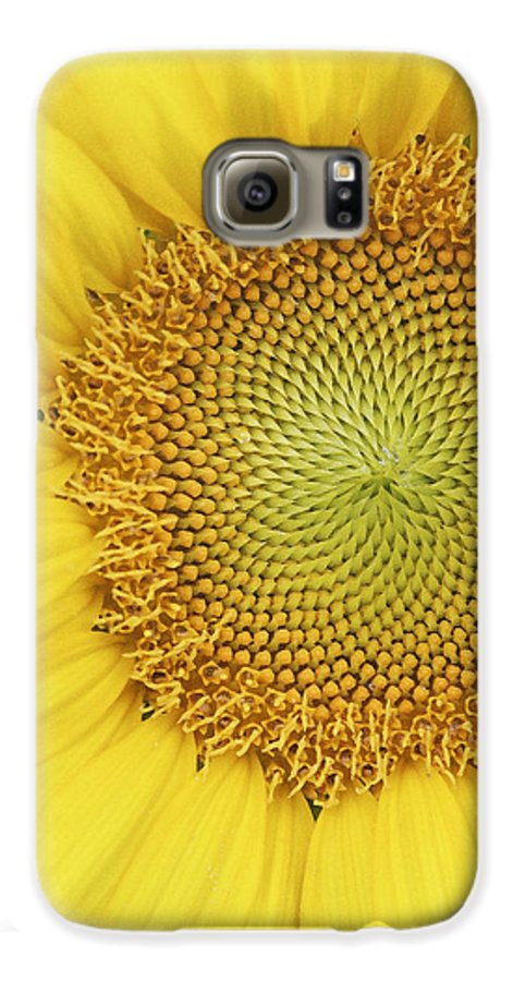 Sunflower Galaxy S6 Case featuring the photograph Sunflower by Margie Wildblood