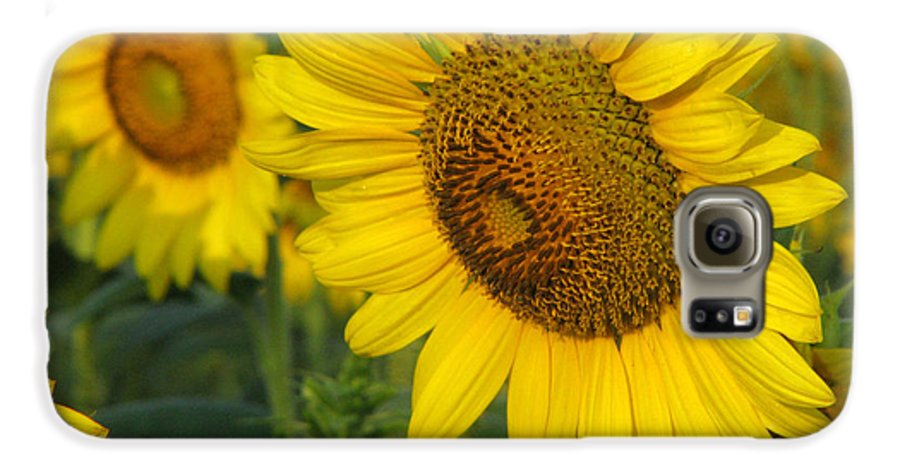 Sunflowers Galaxy S6 Case featuring the photograph Sunflower Series by Amanda Barcon
