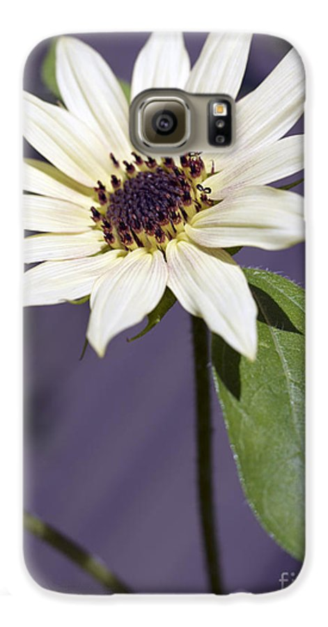 Helianthus Annus Galaxy S6 Case featuring the photograph Sunflower by Tony Cordoza