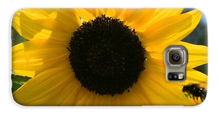 Flower Galaxy S6 Case featuring the photograph Sunflower With Bee by Dean Triolo