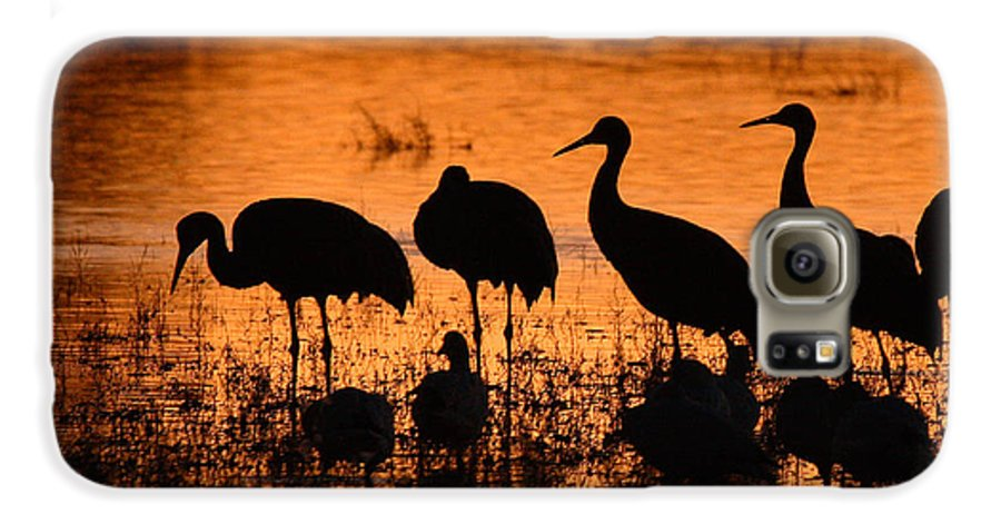 Crane Galaxy S6 Case featuring the photograph Sunset Reflections Of Cranes And Geese by Max Allen
