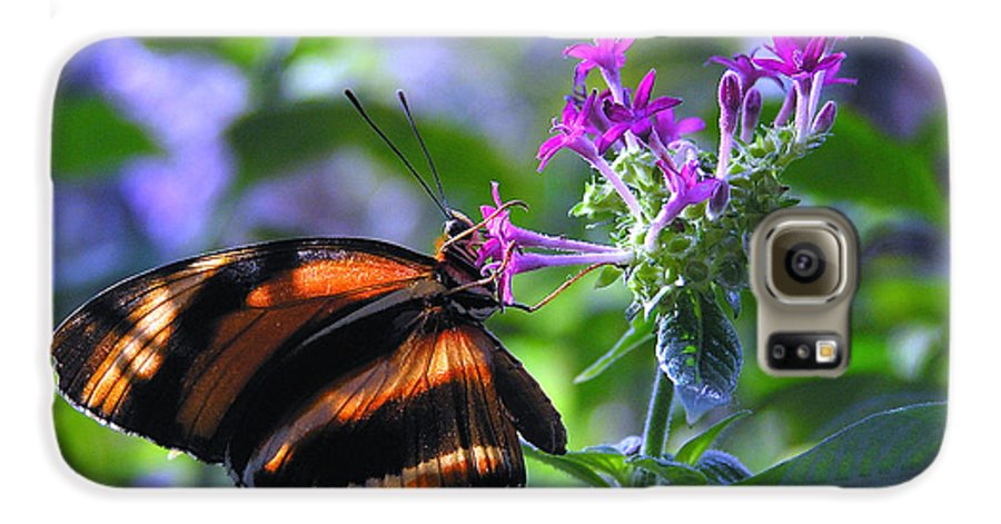 Butterfly Galaxy S6 Case featuring the photograph Sweet Nector by Louise Magno