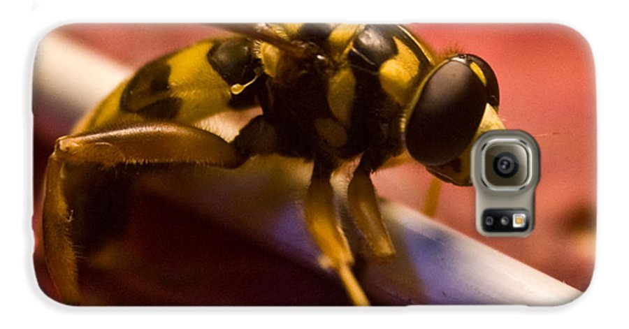 Insect Galaxy S6 Case featuring the photograph Syrphid Fly Poised by Douglas Barnett