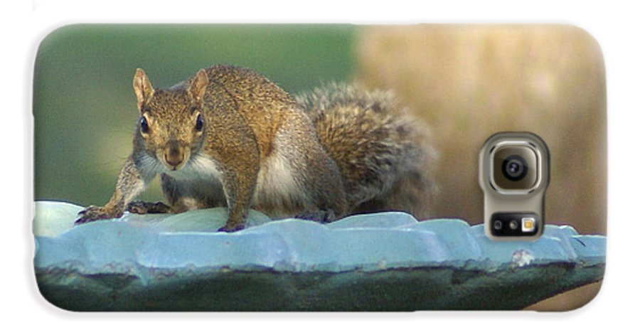 Squirrel Galaxy S6 Case featuring the painting Testing The Waters by Debbie May