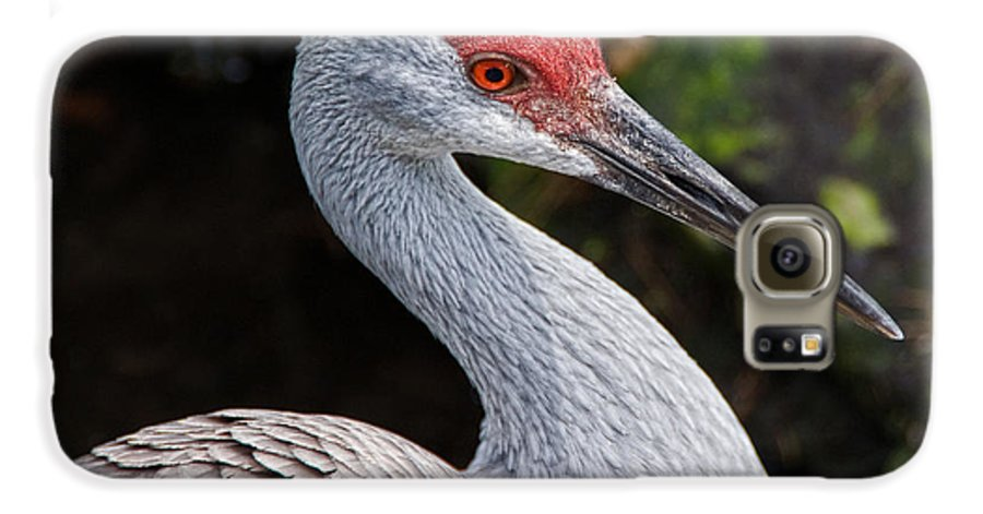 Bird Galaxy S6 Case featuring the photograph The Greater Sandhill Crane by Christopher Holmes